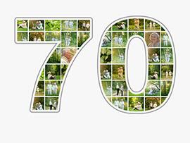 Collage Zahl 70 viele Bilder